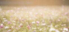 The Wallflower & Wallace - field of flowers