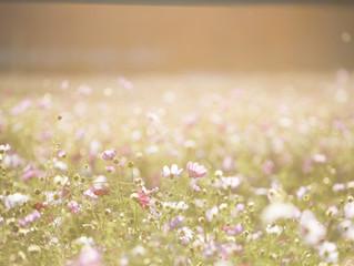Let's Go Forward on the Flowery Path