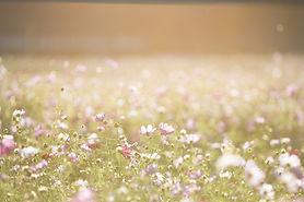 Pole květin