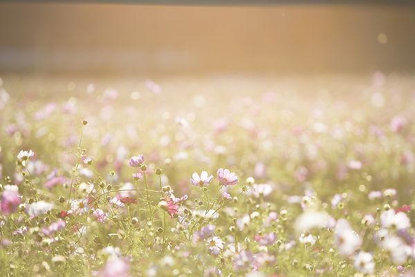 꽃의 필드