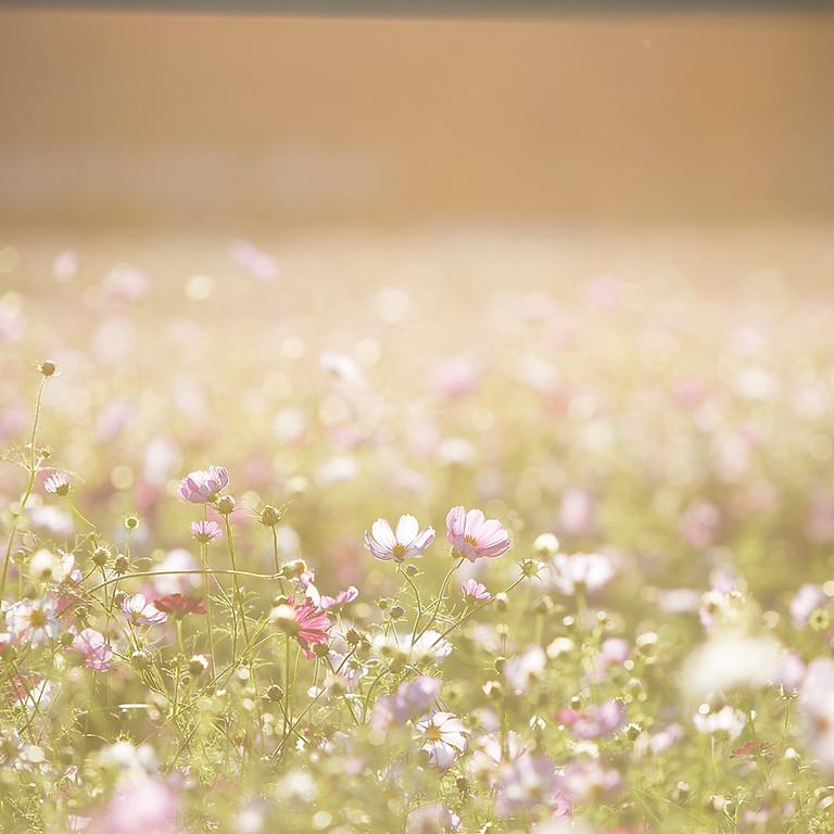 Barnsdale Gardens Workshop - Plant Medicine for a Positive Mood