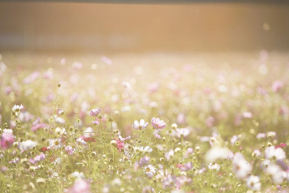 Feld voller Blumen