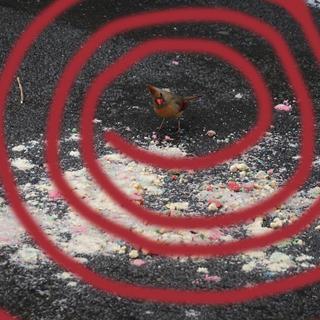 birdraysbest.jpg