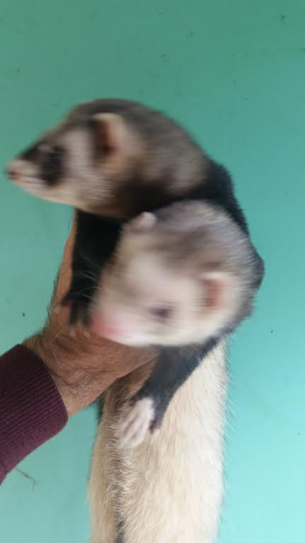 Marci and Pandi