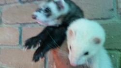Stuart and Nutmeg