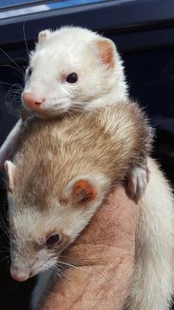 Tom & Fidget