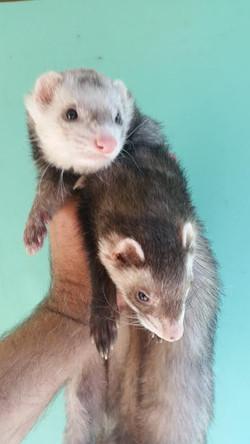 Angus and Rufus