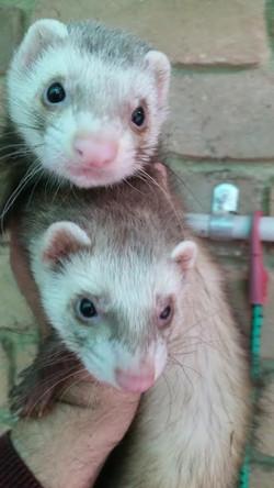 Gizmo and Misty