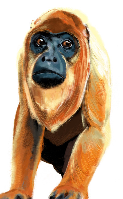 Coco the howler monkey