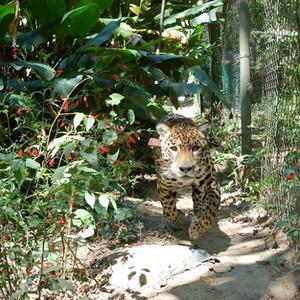 Jaguaru, 2009 © Laura Coleman