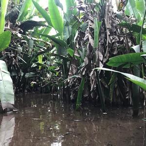 Walking to Jaguaru through the swamp, 2019 © Laura Coleman