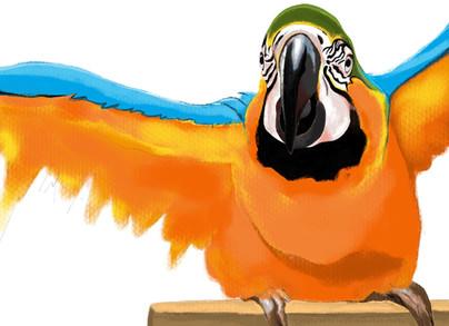 Lorenzo the macaw