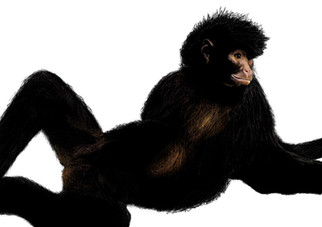 Morocha the spider monkey