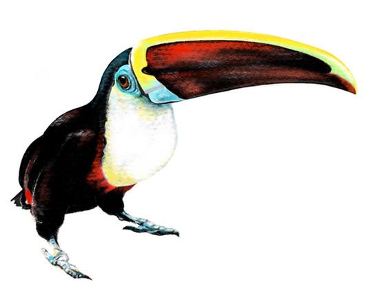 Bitey the toucan