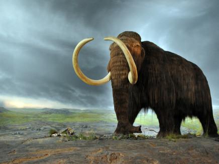 Mudanças climáticas extinguiram os maiores animais da América do Norte