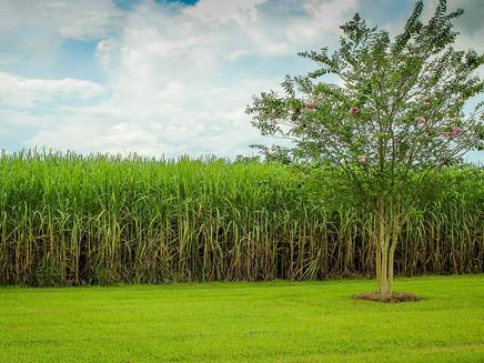 Projeto brasileiro usa palha da cana-de-açúcar para gerar energia renovável