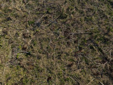 Devido ao desmatamento, Acre tem 17 municípios ameaçados de calor extremo