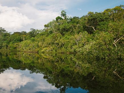 Amazônia brasileira emitiu mais carbono do que absorveu na década de 2010