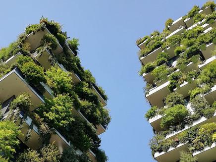 Lista da FAO inclui três cidades brasileiras entre as mais arborizadas do mundo