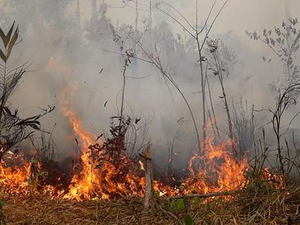 Secas no sul da Amazônia e no Pantanal foram as piores dos últimos 50 anos