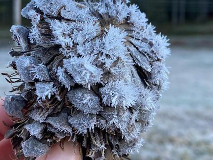 Sul de Minas registra temperaturas abaixo de 0º C e geada; veja fotos