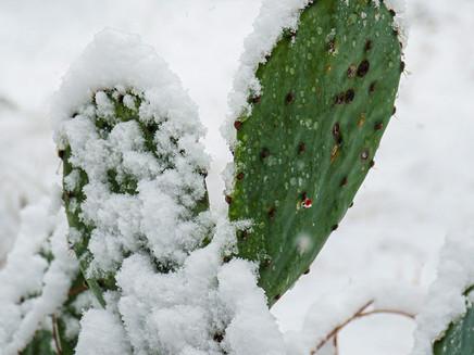 """Temperaturas de fevereiro destoam do padrão com novas """"normais climatológicas"""""""