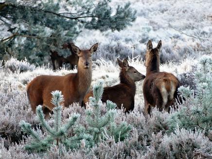 Mudanças climáticas podem reduzir habitats de espécies em 23% até 2100