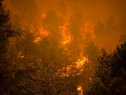 Manifesto pede medidas urgentes de bem-estar em meio às mudanças climáticas