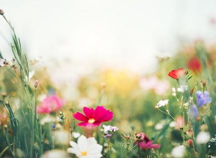 Primavera: O que é o equinócio, que marca o início da estação tão especial
