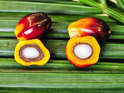 Alemanha deve acabar com uso de óleo de palma em biocombustíveis a partir de 2023