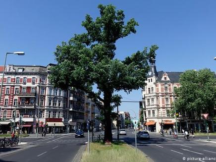 Aplicativo ajuda a salvar árvores em Berlim