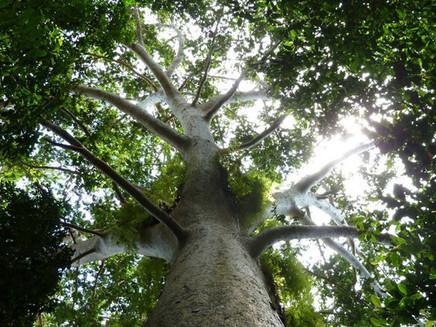 PNUMA apoia ação para plantar 1 trilhão de árvores no mundo e restaurar Mata Atlântica no Brasil