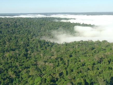 Ministério do Meio Ambiente demite principais autoridades de combate à mudança climática