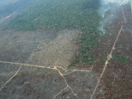 Relatório da ONU diz que Brasil 'precisa urgentemente fortalecer ações' de proteção ao meio