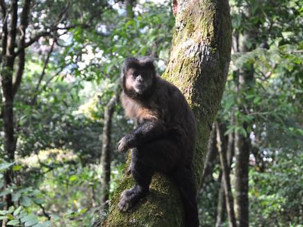 6 em cada 10 brasileiros defendem proteção da floresta como medida contra mudanças do clima