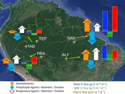 Amazônia passou a emitir mais carbono do que absorver