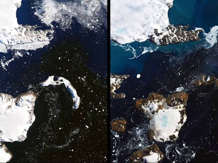 Como uma onda de calor mudou uma ilha na Antártida em apenas nove dias
