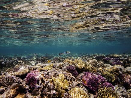 14% dos corais do mundo desapareceram entre 2009 e 2018, aponta relatório