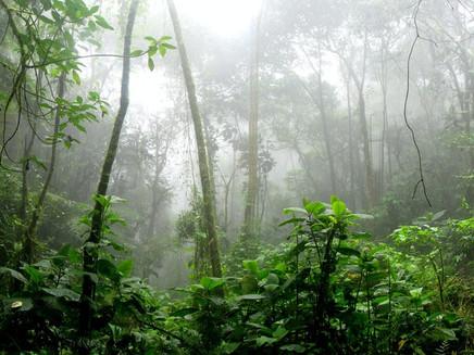 Clima pode fazer com que bebês nasçam prematuros e com menor peso na Amazônia, sugere estudo