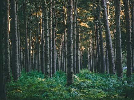 Fazendas do País de Gales podem virar florestas até 2030 por Brexit