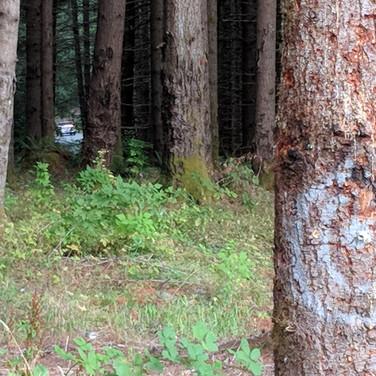 Car in target shooting range of FS 70 road.