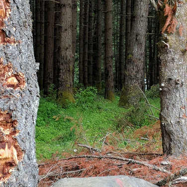 Use earthen backstop, not trees.
