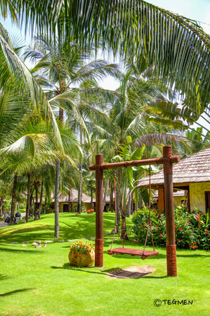Palm Garden and Swing