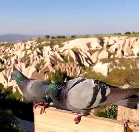 Долина Голубей-Каппадокия