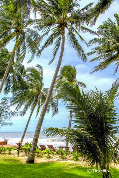 Palm Trees and Bech