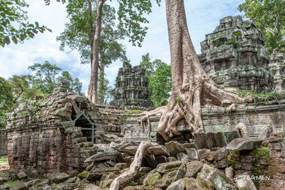 Ta Prohm Temple Banyan Tree