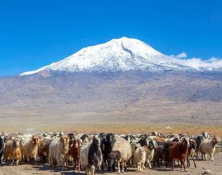Ararat Mountain_edited.jpg