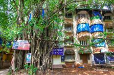 Banyan Tree and Building