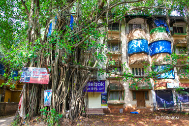 Banyan Tree and Building