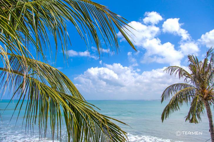 Kuta Beach Palm Tree